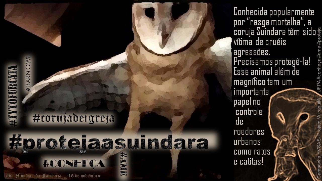 Setor de Animais Silvestres do Hospital Veterinário da UFPA lança campanha para proteção da coruja Suindara