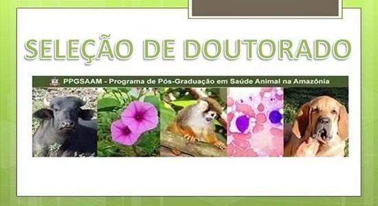 Programa de Pós-Graduação em Saúde Animal na Amazônia oferta duas vagas para doutorado